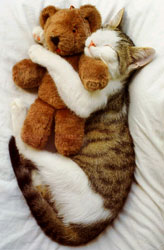 cat_teddybear